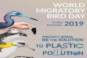 World Migratory Bird Day was observed on 11th May