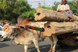 Punjab and Haryana High Court has accorded the status of legal person or entity to animals