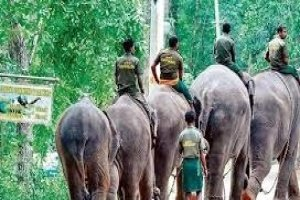 Indias first elephant rehabilitation center will be fixed up at Kerala's Kottoor