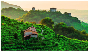 Italy's Prosecco hills placed to UNESCO World Heritage list