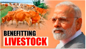 PM Modi launched National Animal Disease Control Programme