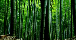 World Bamboo Day was celebrated on 18 September