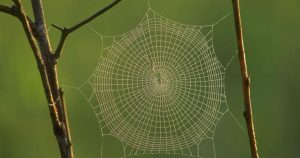 Scientists plan to conduct the largest DNA barcoding of spiders in India