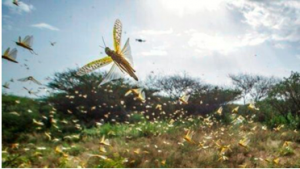 Pakistan declared a national emergency to battle locusts