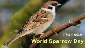 20 March as World Sparrow Day